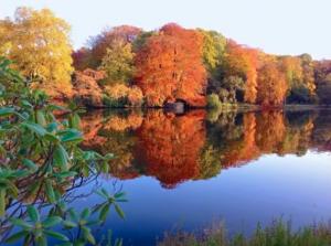 """Botanischer Garten Rombergpark: """"Ein Gemälde, das niemals fertig wird"""""""